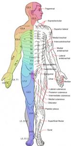 Segmentale verbindingen