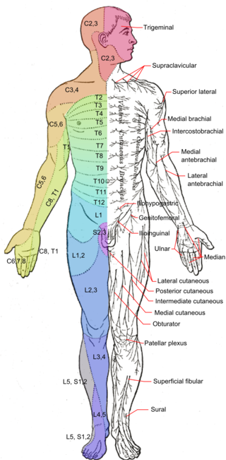 Praktijk Sportifit, segmentale verbindingen